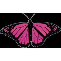 Бабочка чёрно-малинового цвета