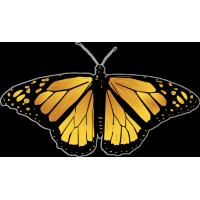 Бабочка чёрно-жёлтого цвета