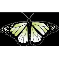 Бабочка чёрно-зелёного цвета