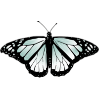 Бабочка чёрно-голубого цвета