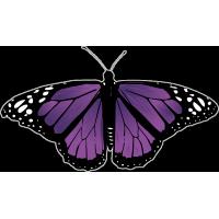 Бабочка чёрно-сиреневого цвета