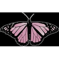 Бабочка чёрно-розового  цвета