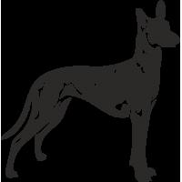 Собака американский голый терьер