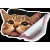 Кот выглядывает из бака