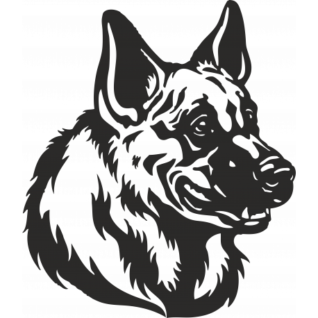 Морда собаки